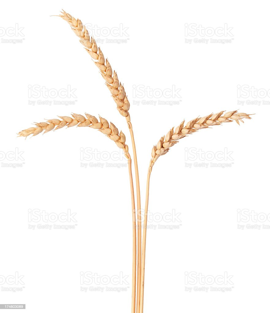 Wheat and white background royalty-free stock photo