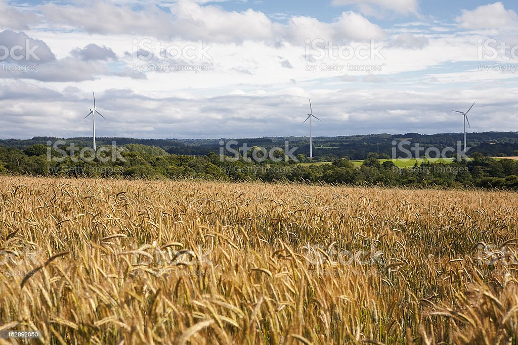 Wheat and wind power field stock photo