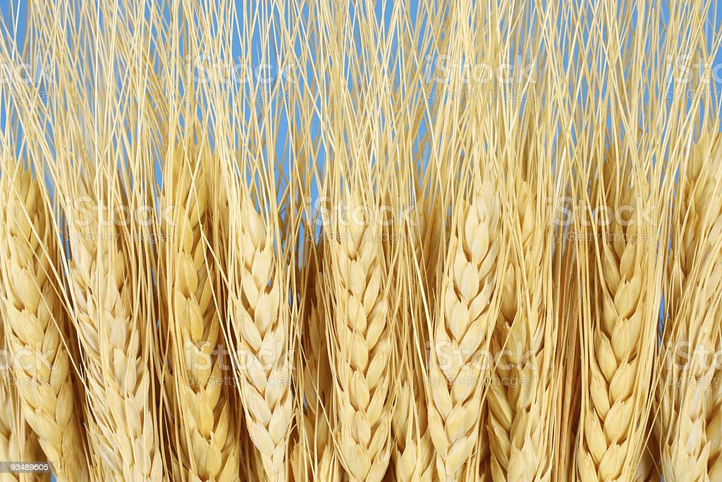 Wheat Background royalty-free stock photo