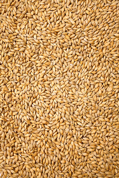 Wheat background view from the top close up stock photo