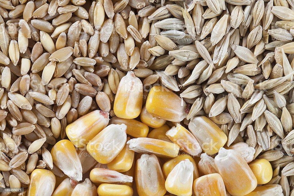 wheat, barley and corn royalty-free stock photo