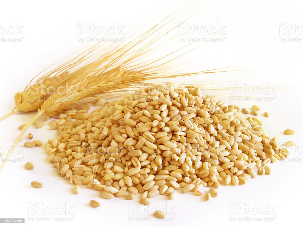 Wheat Berries with Ears royalty-free stock photo