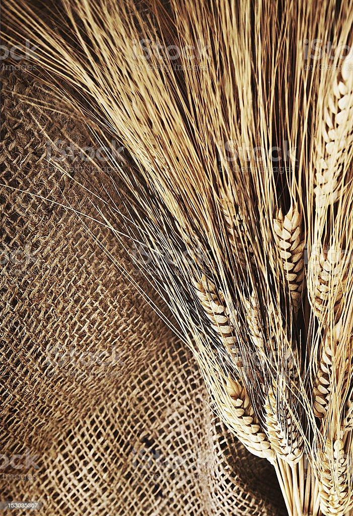 Wheat border royalty-free stock photo