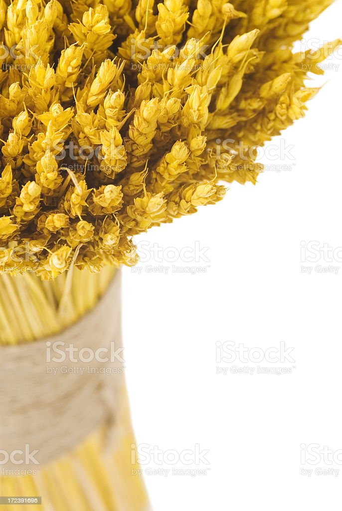 Wheat bouquet royalty-free stock photo