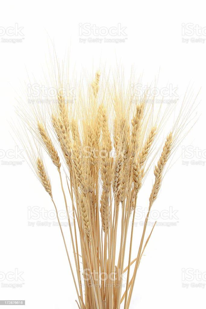 Wheat Bunch royalty-free stock photo