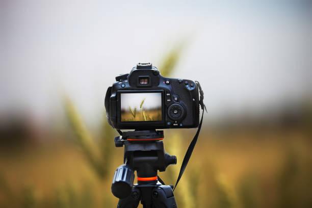 wheat crop field nature landscape - statyw zdjęcia i obrazy z banku zdjęć