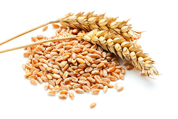 wheat ears and grain two wheat ears on a heap of grain, white background ear of wheat stock pictures, royalty-free photos & images