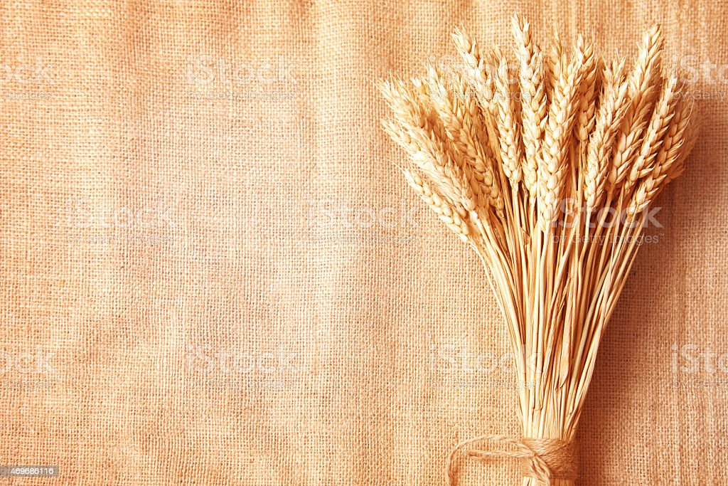 Wheat ears border on burlap background stock photo