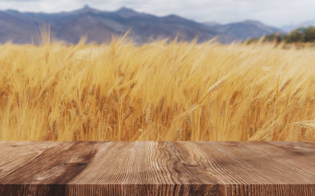 Wheat ears field background, ripe wheat crop with wooden floor Wheat ears field background, ripe wheat crop with wooden floor ear of wheat stock pictures, royalty-free photos & images