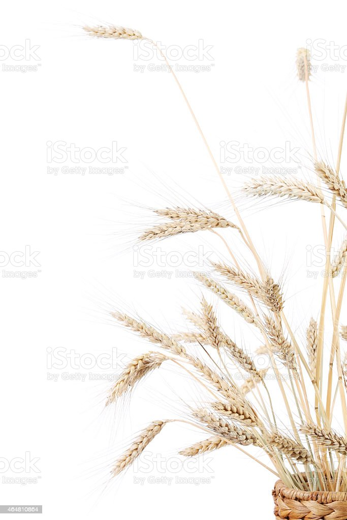 Wheat ears in wicker basket. stock photo