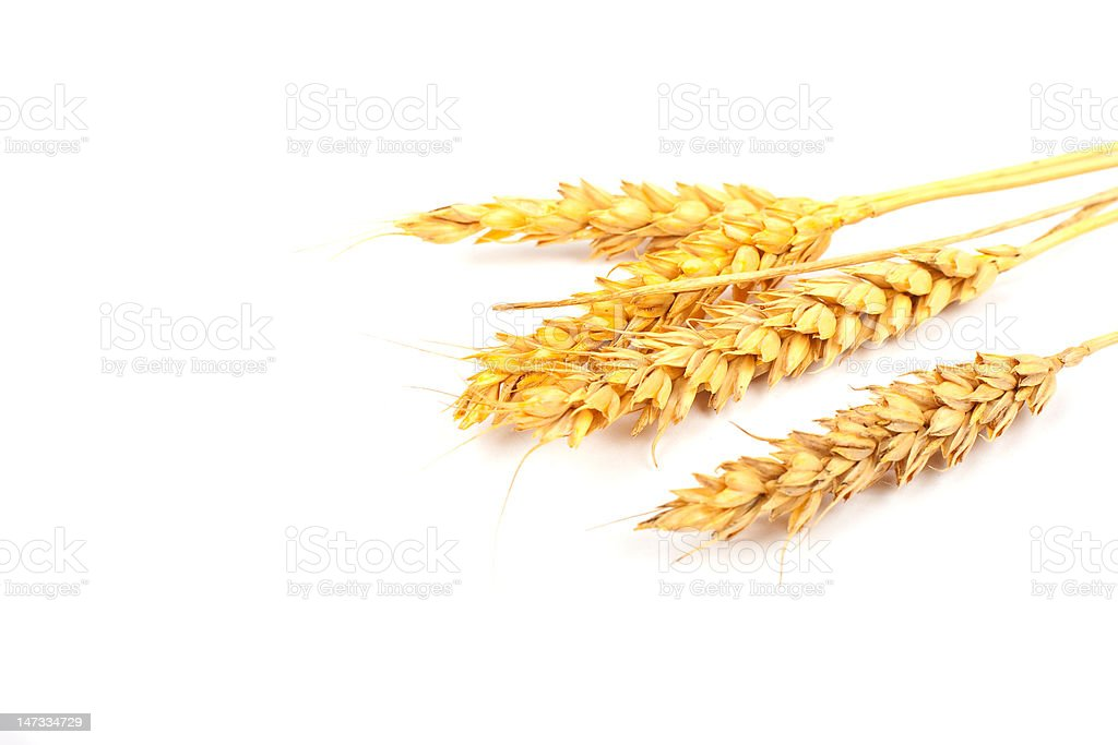 Wheat ears isolated on white royalty-free stock photo