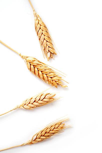 Wheat ears isolated stock photo
