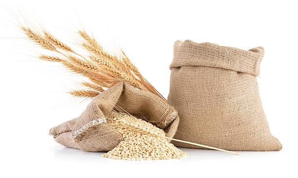 Wheat Ears Wheat ears over sack of wheat grains isolated on white background ear of wheat stock pictures, royalty-free photos & images