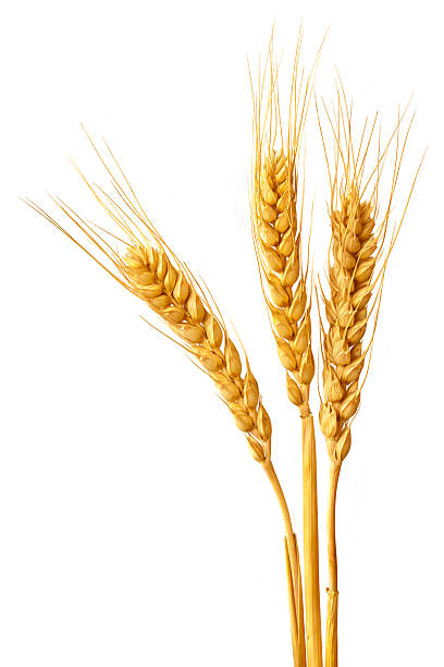 wheat ears - barley stock pictures, royalty-free photos & images