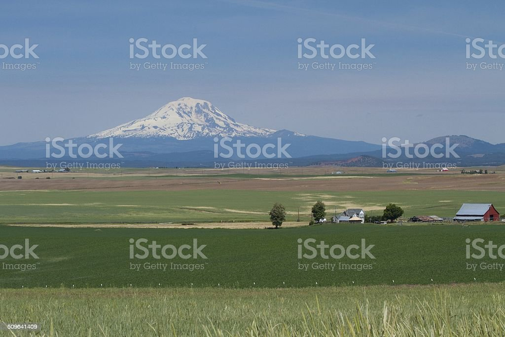 Wheat Farm in Eastern Washington Valley Agriculture with Mount Rainier stock photo
