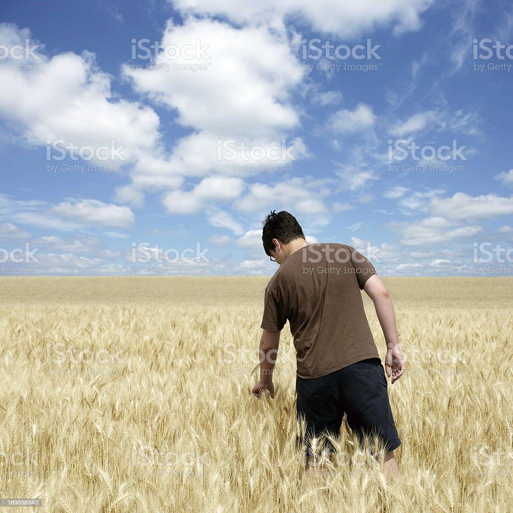 XXXL wheat farmer royalty-free stock photo