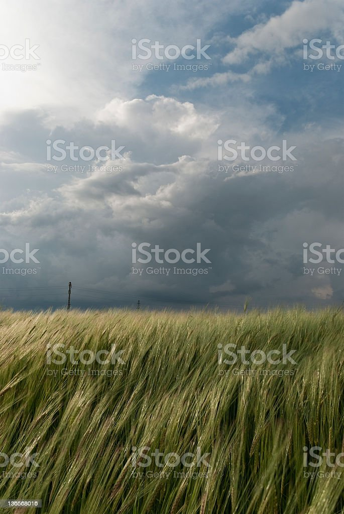 Wheat Field Against A Storm royalty-free stock photo