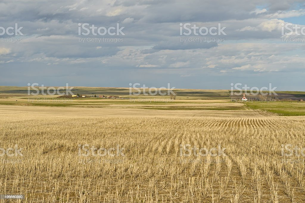wheat field and small village in Canadian Prairies stock photo