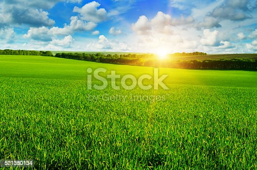 istock wheat field and sunrise in the blue sky 521380134