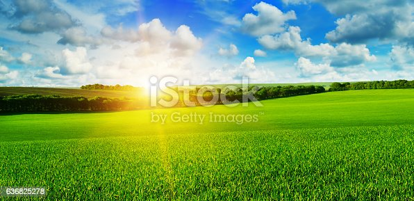 istock wheat field and sunrise in the blue sky 636825278