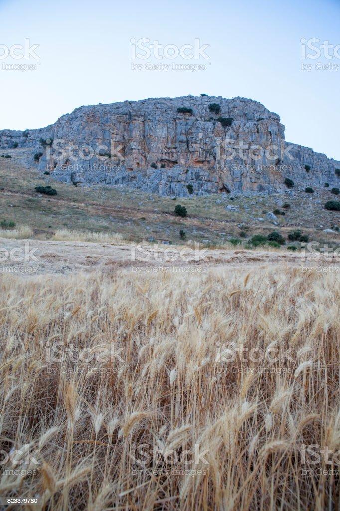 Wheat field at mountain range of Antequera stock photo