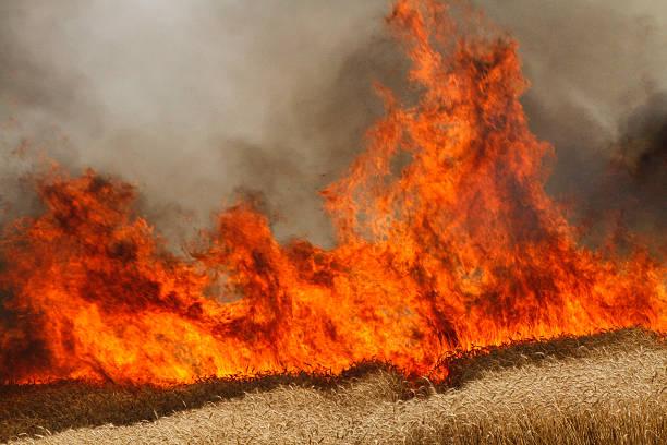 Wheat Field Fire stock photo