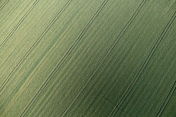 Wheat field from above stock photo