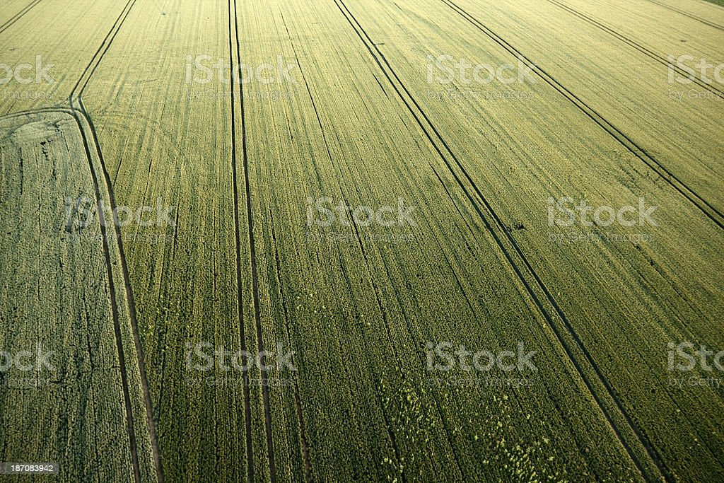 Wheat field from above with perspective stock photo
