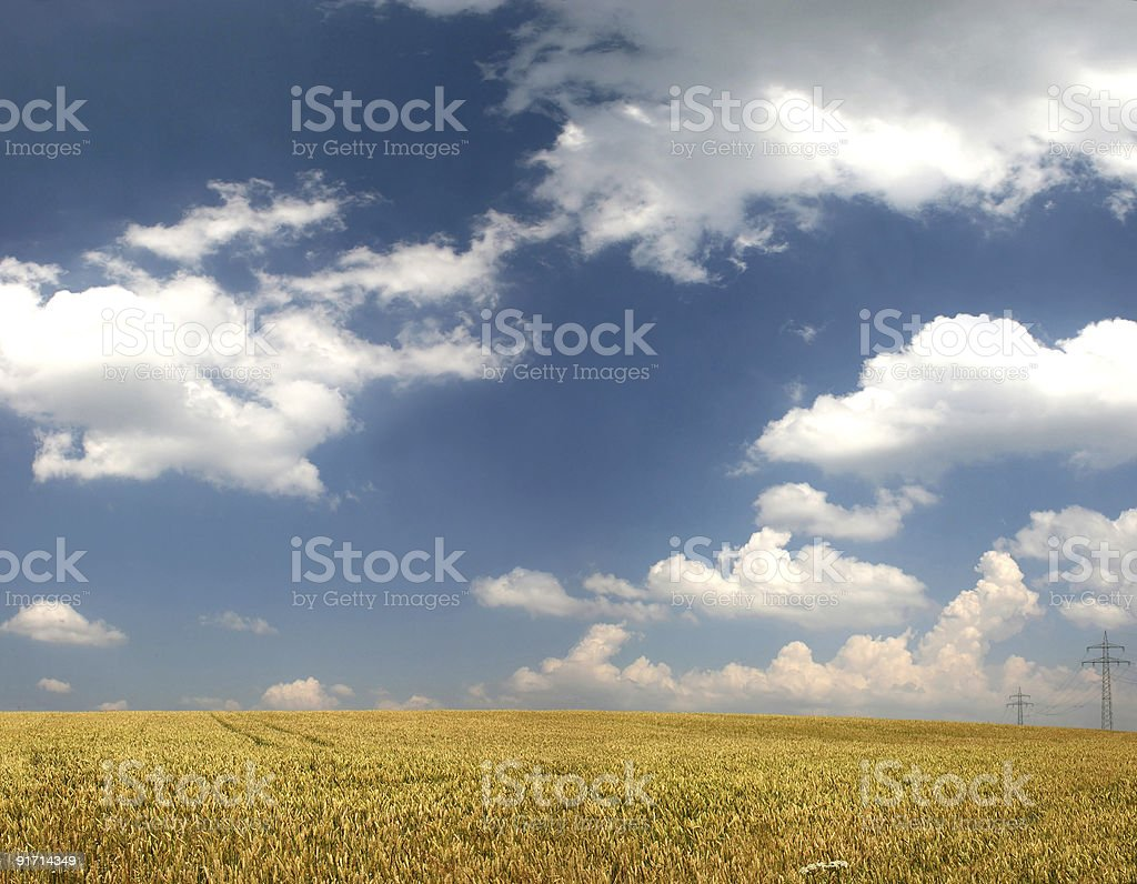 Wheat field in late summer with clouds royalty-free stock photo