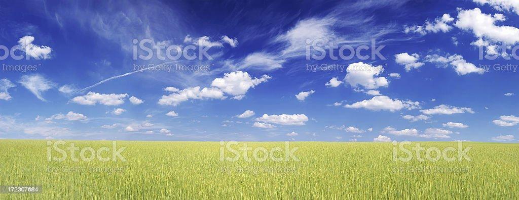 Wheat field Landscape royalty-free stock photo