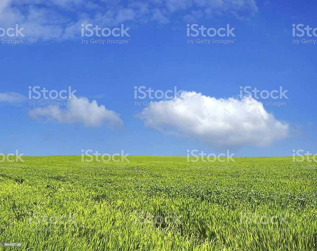 Wheat field over beautiful blue sky 2 royalty-free stock photo