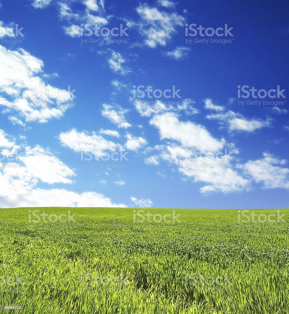 Wheat field over beautiful blue sky 3 royalty-free stock photo