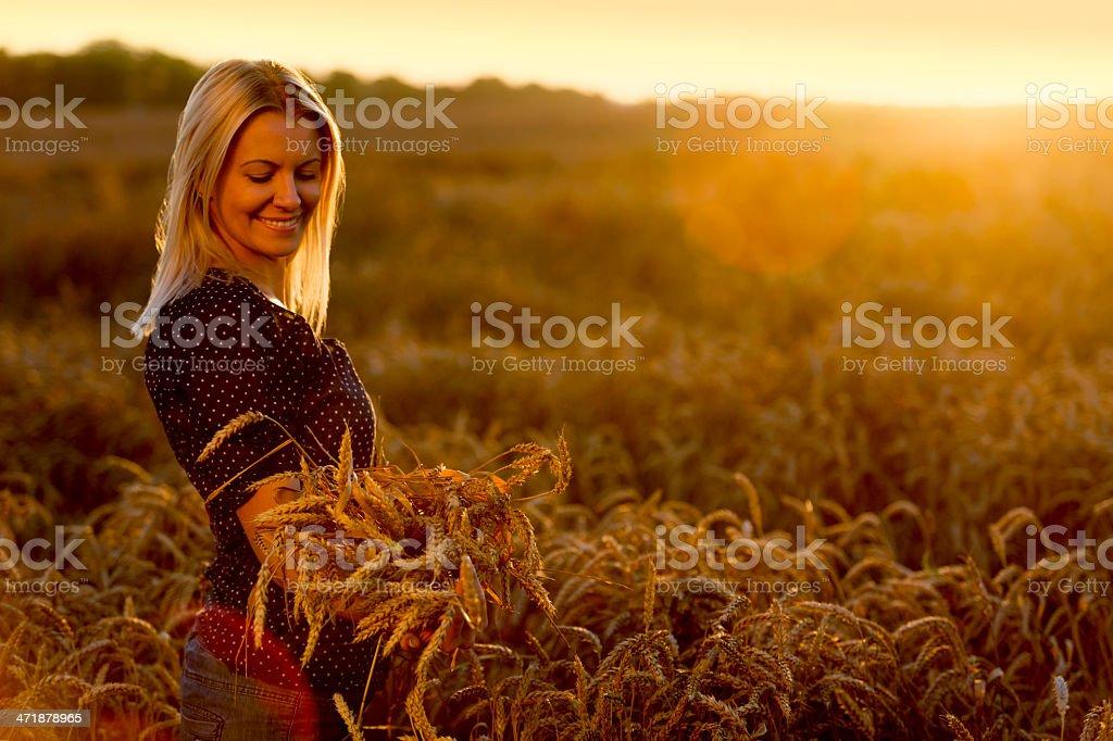 Champ de blé - Photo