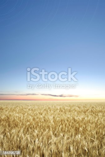 istock XXXL wheat field twilight 184395705