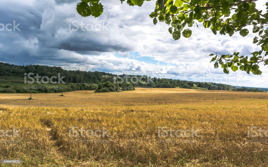 Wheat field under clouds stock photo