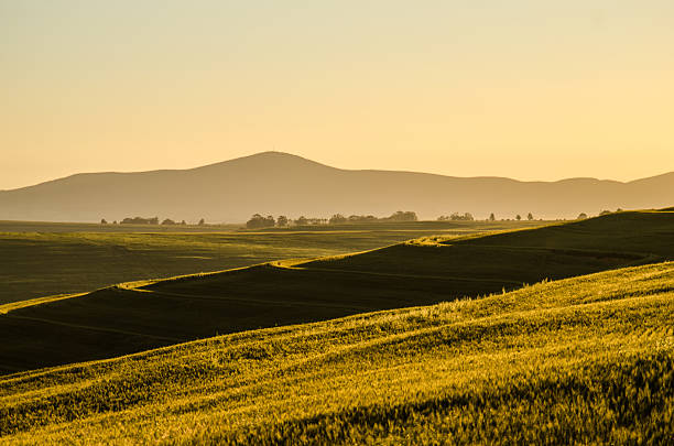 Wheat field with mountains stock photo