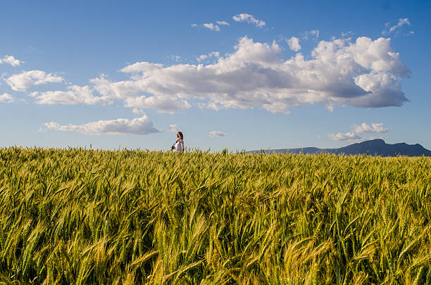 Wheat field with woman stock photo