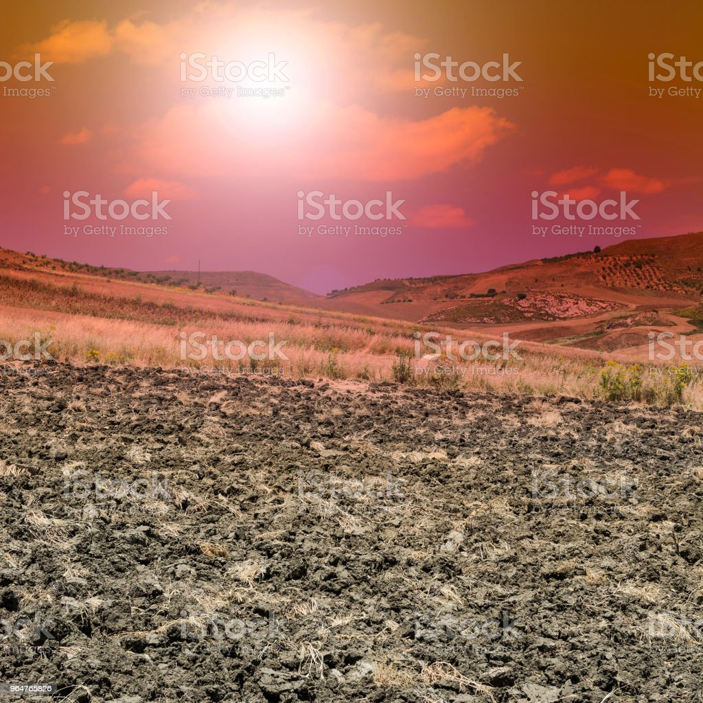 Wheat fields after harvesting. royalty-free stock photo