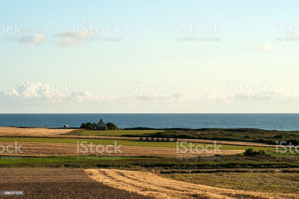 Wheat fields at the atlantic ocean stock photo