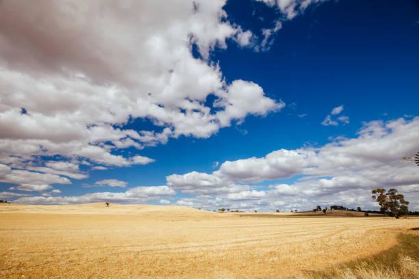 Wheat Fields in Moolort Plains in Australia stock photo