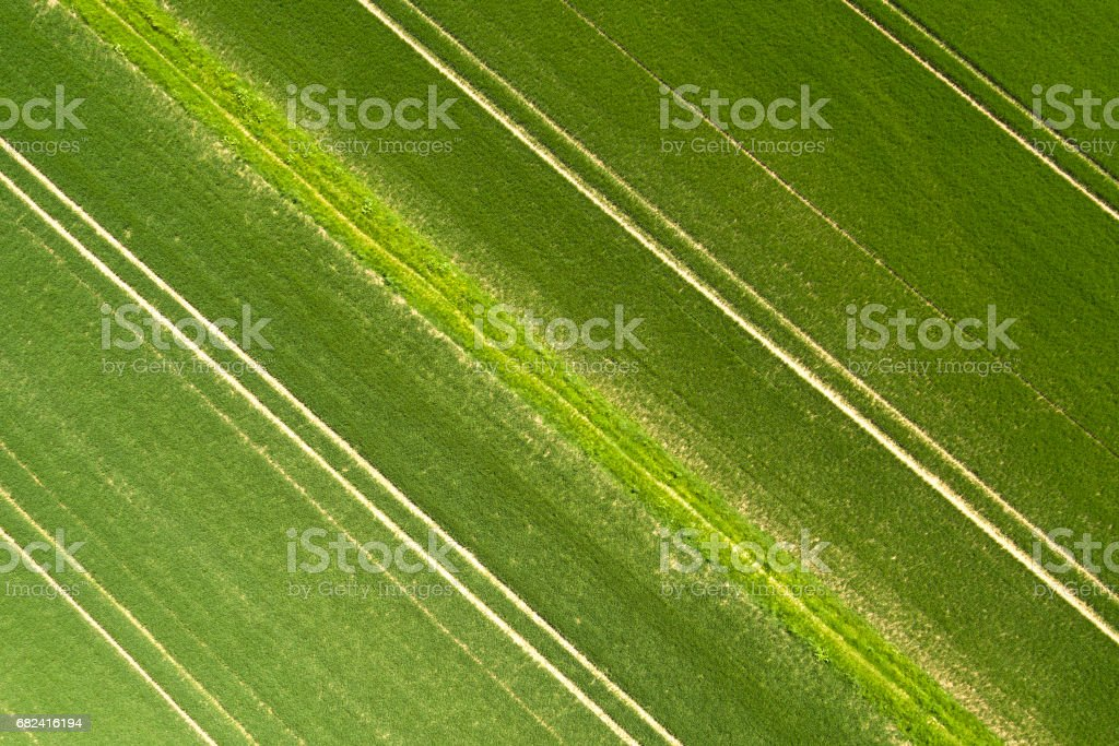 Wheat fields in spring - aerial view royalty-free stock photo