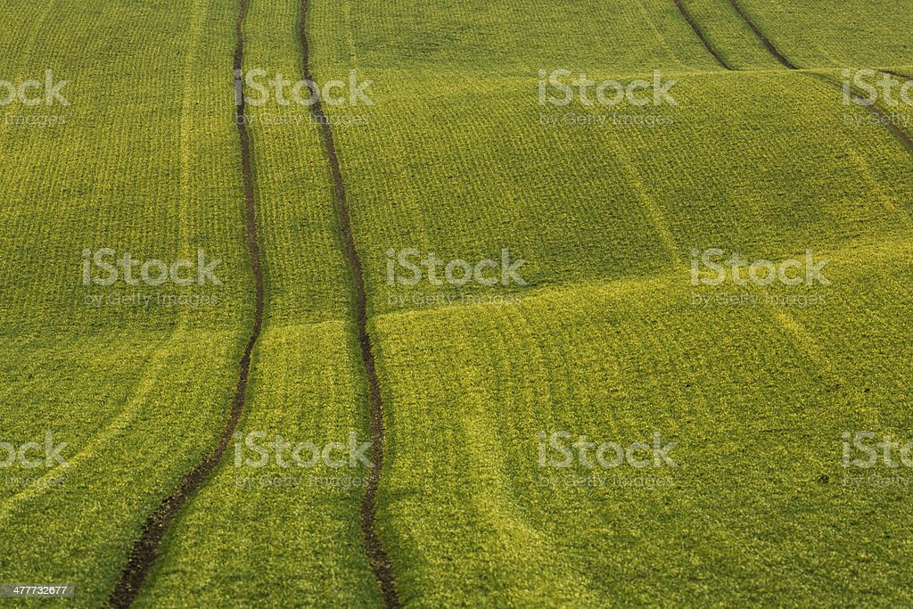 Wheat fields royalty-free stock photo
