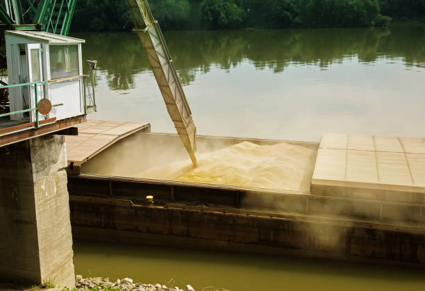 Wheat filled in river ship for transportation stock photo