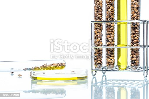 891126108istockphoto Wheat genetically modified, Plant Cell, Petri Dish 483708558