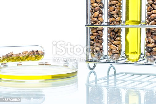 891126108istockphoto Wheat genetically modified, Plant Cell, Petri Dish 483708560