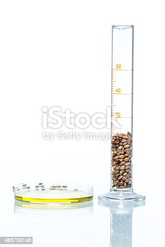 891126108istockphoto Wheat genetically modified, Plant Cell, Petri Dish 483709148