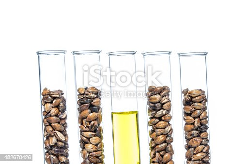 891126108istockphoto Wheat genetically modified, Plant Cell 482670426