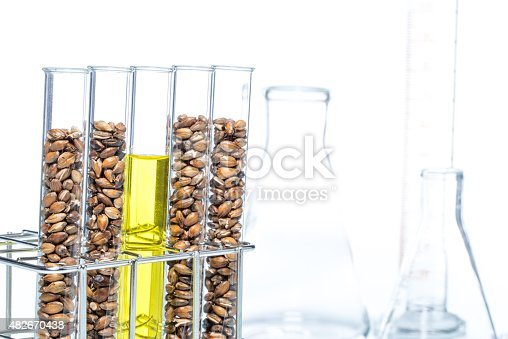 891126108istockphoto Wheat genetically modified, Plant Cell 482670438
