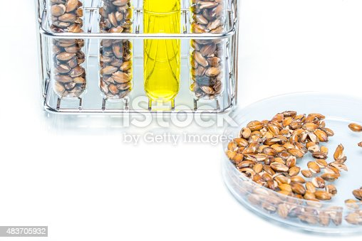 891126108istockphoto Wheat genetically modified, Plant Cell 483705932