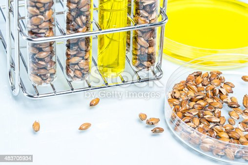 891126108istockphoto Wheat genetically modified, Plant Cell 483705934